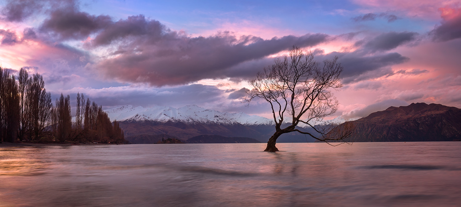 Landscape Photography Workshop Tour- The Wanaka Tree, New Zealand by VivaKarolina