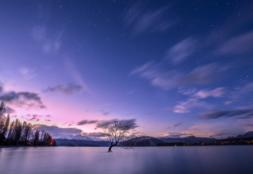 Landscape Photography Workshop Tour - The Wanaka Tree, New Zealand by VivaKarolina