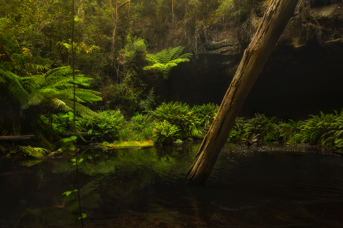Mystery of the Forest - Lower Kalimna Falls, Waterfall Photography in Lorne, Great Ocean Road | We Are Raw Photography