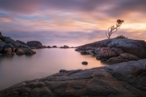 Tasmania Landscape Photography Tour - The Lonely Tree Binalong Bay | Holiday with We Are Raw Photography Tours